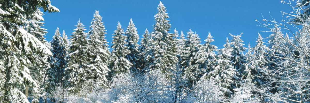 Winterlandschaft (Header 2020-2021)